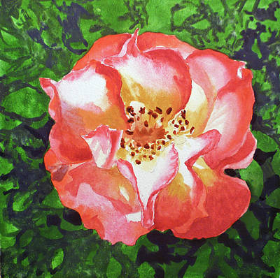 Roses Royalty-Free and Rights-Managed Images - Rose  by Irina Sztukowski