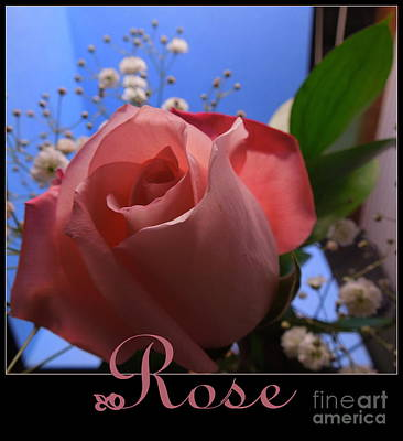 Photograph - Rose Is A Rose by Renee Trenholm