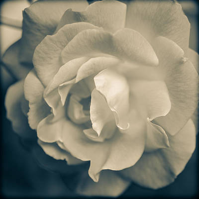 Photograph - Rose Is Rose Tonal by Ronda Broatch
