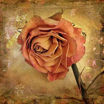 Photograph - Rose  by Jessica Jenney