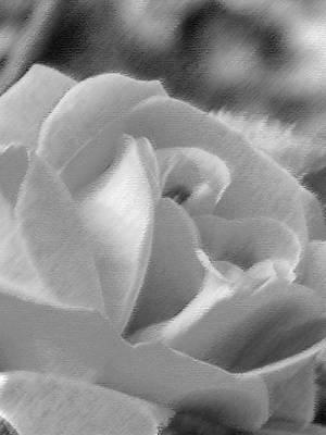 Rose Art Print by John Bradburn
