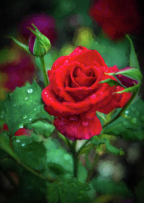 Photograph - Rose Kissed By The Rain by Jerry Gammon