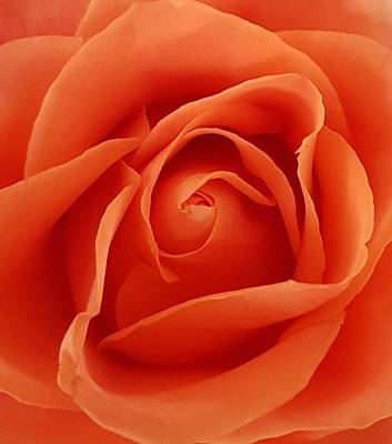Photograph - Rose by Lali Partsvania