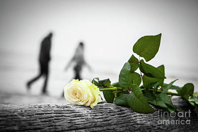 Photograph - Rose Lying On Broken Tree On The Beach. A Couple Walking In The Background. Love by Michal Bednarek