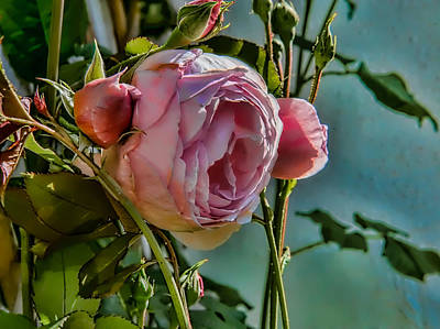Photograph - Rose M by Leif Sohlman