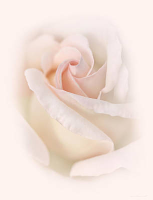 Photograph - Rose Flower Macro Soft Pink by Jennie Marie Schell