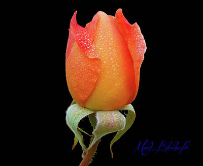 Photograph - Rose-marie by Mark Blauhoefer