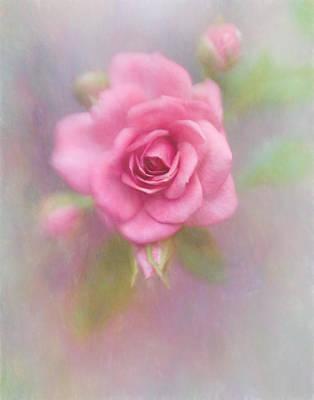 Photograph - Rose Of Pink by David and Carol Kelly