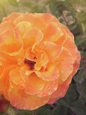 Rose Of Seville Art Print by JAMART Photography