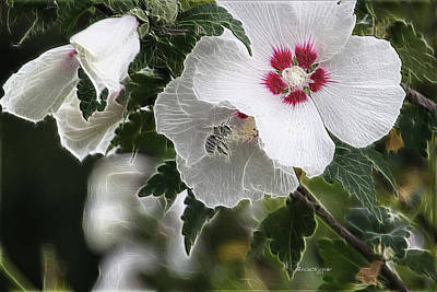 Photograph - Rose Of Sharon And Bee by Ericamaxine Price
