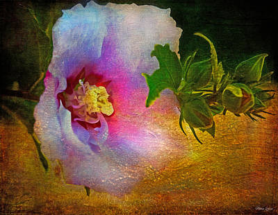 Photograph - Rose Of Sharon Cracked Varnish by Anna Louise