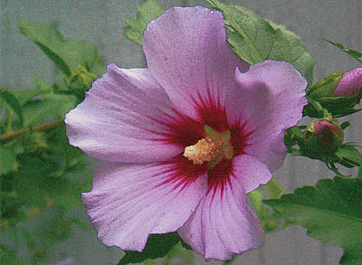 Painting - Rose Of Sharon by John Dyess
