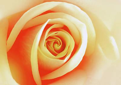 Digital Art - Rose Of Splendour by Georgiana Romanovna