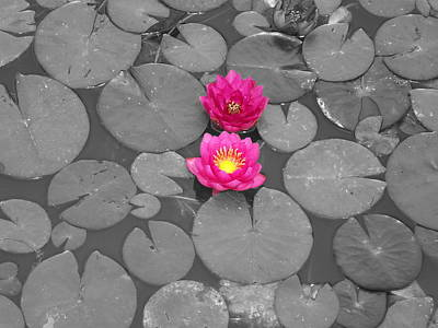 Rose Of The Water Art Print