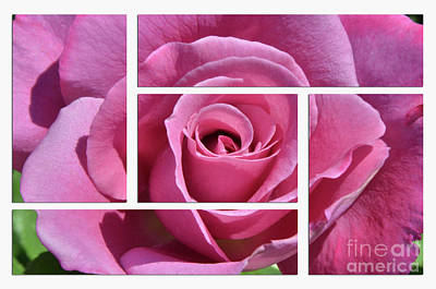 Photograph - Rose Oh So Pretty by Debby Pueschel