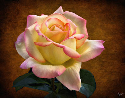 Photograph - Rose Faux Oil Painting by Endre Balogh