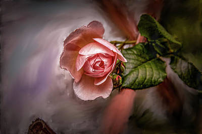 Rose On Paint #g5 Art Print
