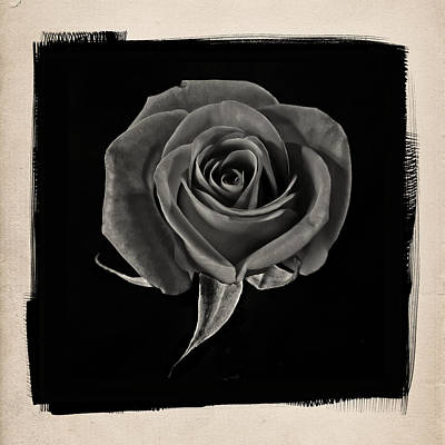 Red Photograph - Rose One B by Patrick Chuprina