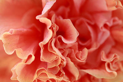 Photograph - Rose Petals Abstract by Angela Murdock