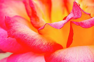 Photograph - Rose Petals Close Up by Teri Virbickis