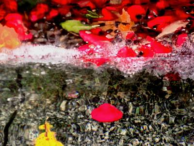 Photograph - Rose Petals In A Fountain by Stephanie Moore