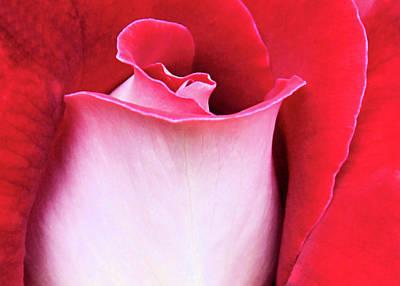 Photograph - Rose Petals by Kristin Elmquist
