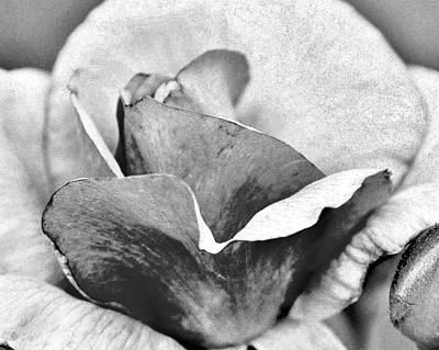 Photograph - Rose Petals In Black And White by Kim Bemis