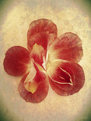 Print featuring the photograph Rose Petals by Linda Sannuti