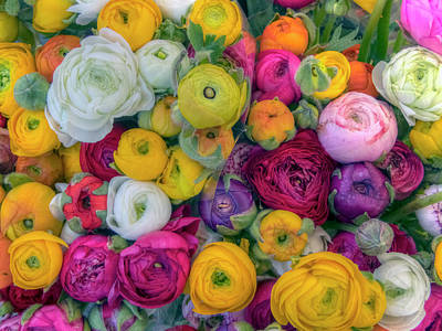 Photograph - Rose Petals by Nadia Sanowar