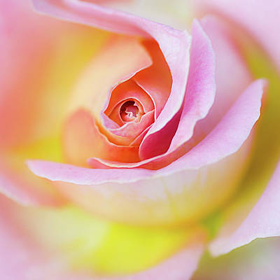 Photograph - Rose Pink Petals And Drops by Julie Palencia