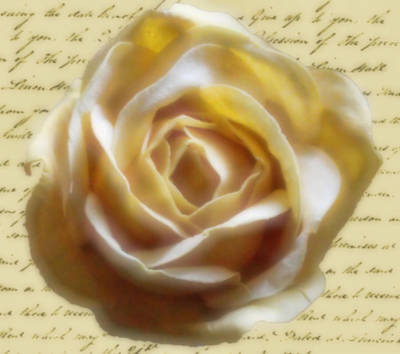 Photograph - Rose Poem by Kristie  Bonnewell