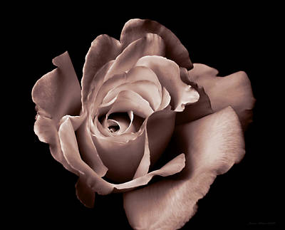 Photograph - Rose Portrait Burnt Mauve by Jennie Marie Schell