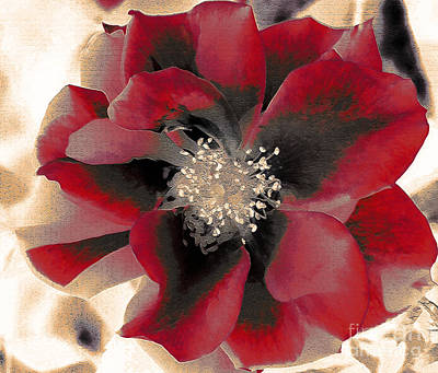 Photograph - Rose Red 1 by Karen Lewis