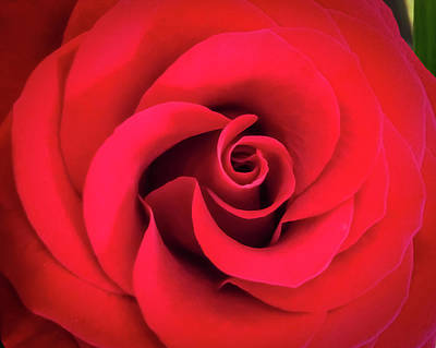Photograph - Rose Red 1 by Ronda Broatch