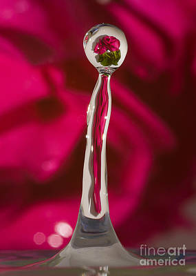 Photograph - Rose Relection by Alissa Beth Photography