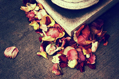 Photograph - Rose Remains by Jessica Jenney