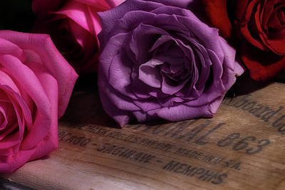 Photograph - Rose Series 2 by Mike Eingle