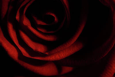 Photograph - Rose Series 3 Red by Mike Eingle