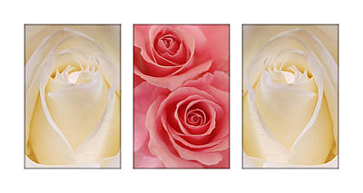 Photograph - Rose Series  by Jill Reger