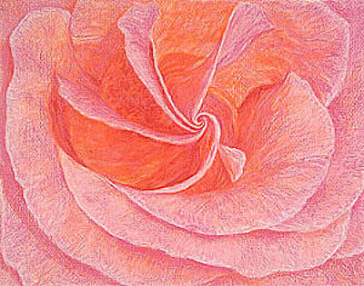 Giclee Drawing - Rose Sprial Pink Fine Art Print Giclee Garden Flower Floral Botanical Love Romance by Baslee Troutman