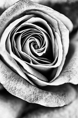 Photograph - Rose Swirl In Monochrome by Vishwanath Bhat