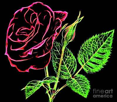 Photograph - Rose The Beautiful 16218 by Ray Shrewsberry