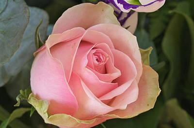 Rose Art Print by Theo Tan