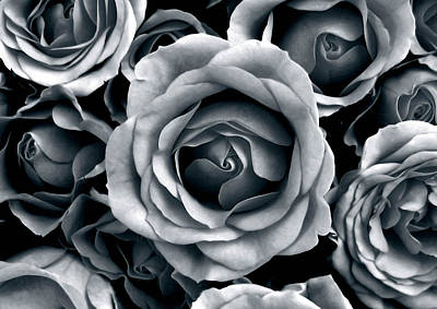 Tonal Photograph - Rose Tones by Jessica Jenney