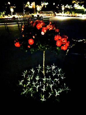 Photograph - Rose Tree At Night by Michael Bessler