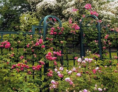 Dogwood Photograph - Rose Trellis by Jessica Jenney