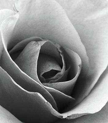 Photograph - Rose Upclose by Florene Welebny
