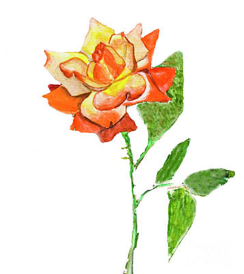 Painting - Rose, Watercolor Painting by Irina Afonskaya