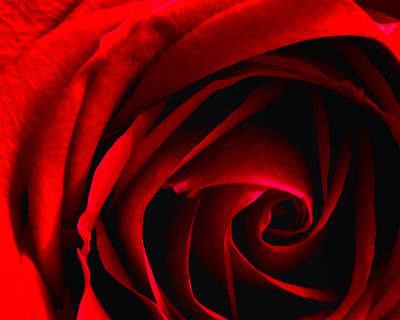 Photograph - Rose Whorl by Timothy Bulone