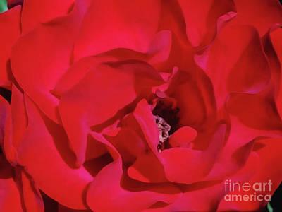 Digital Art - Rose Wine Color by Jasna Dragun